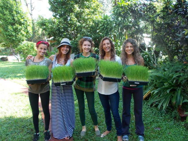 us & wheatgrass